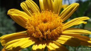 Golden_flower_widescreen