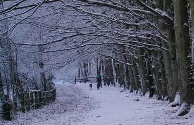 Snowscene_original