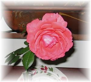Last_rose32005_3