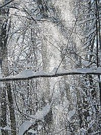 Snow_on_trees